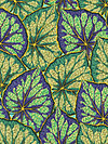 Philip Jacobs PWPJ018-Green Fabric