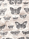 Eclectic Elements PWTH004-Taupe Fabric by Tim Holtz